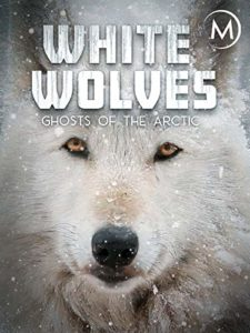 WHITE WOLVES – GHOSTS OF THE ARCTIC<p>(Germany)